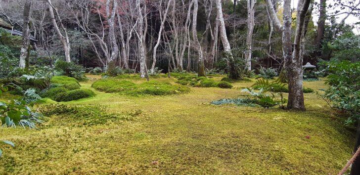 祇王寺の庭園