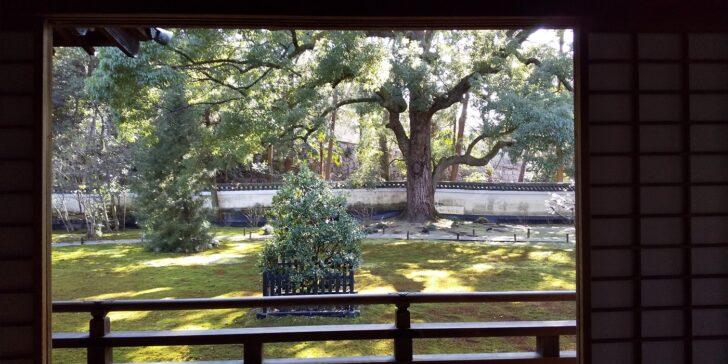 青蓮院の宸殿から見えるお庭