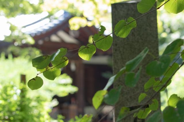 葉っぱがハートの形をした愛の木