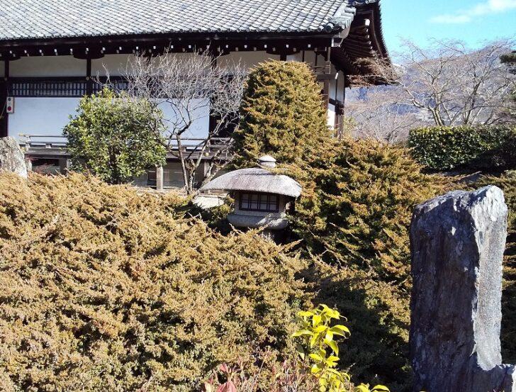 ハイビャクシンと勧修寺型灯籠
