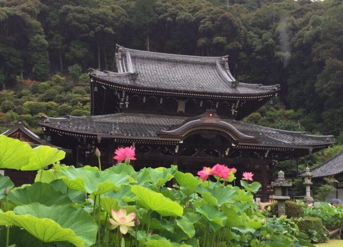 三室戸寺の本堂とハス