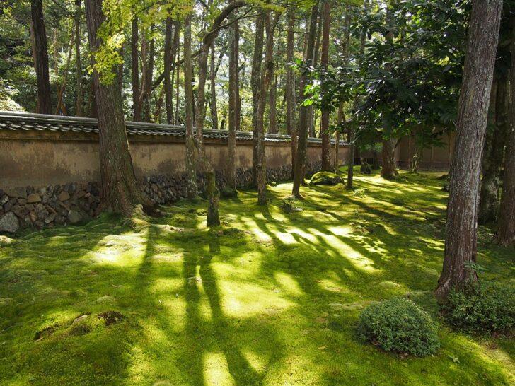 西芳寺の美しい苔