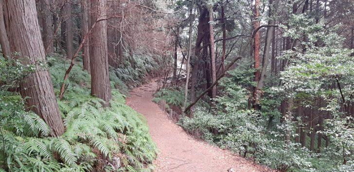 歩きやすい大文字山のコース