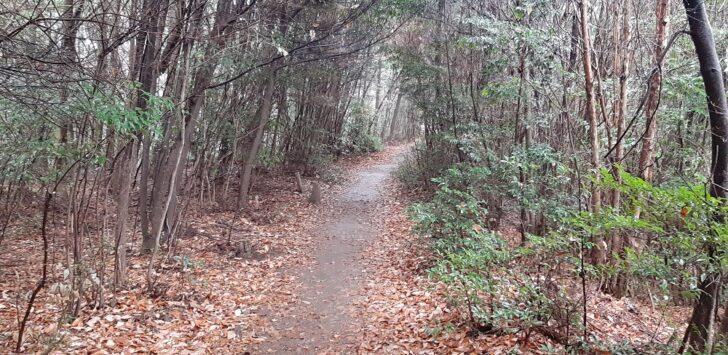 引き続き大文字山の歩きやすい道