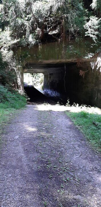 案内板32(北山)周辺のトンネル