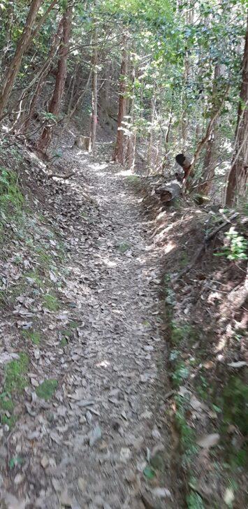 案内板39-2(北山)周辺の上り坂