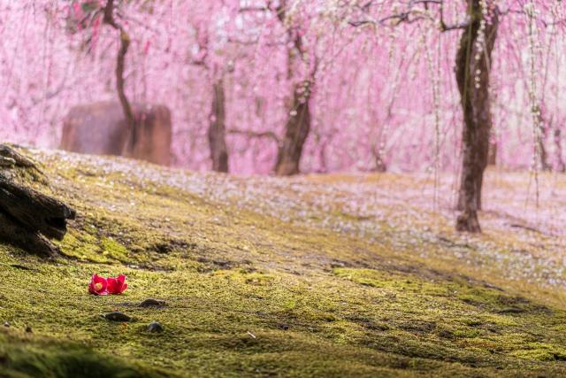 3月におすすめの京都