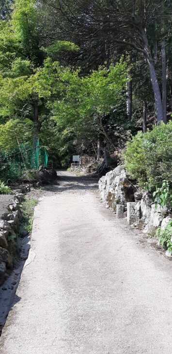神社前の道